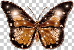 Butterfly File Formats PNG