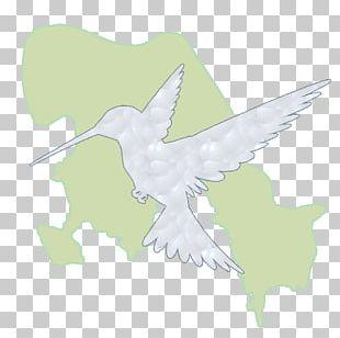 Bird Of Prey Beak Peace PNG
