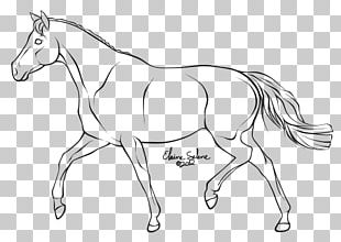 Mule How To Draw A Horse Trot Line Art PNG