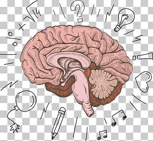 Cerebrum Human Brain Cartoon PNG