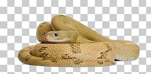 Corn Snake Stock Photography Rat Snake PNG