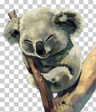 Australia Koala Watercolor Painting PNG