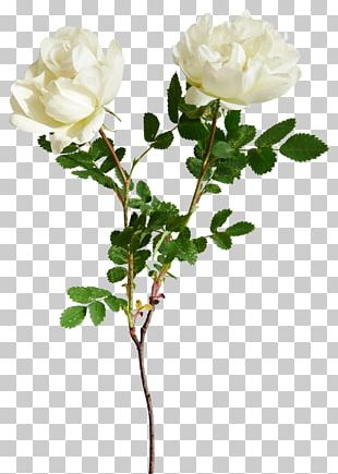 Red Flower White PNG