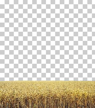 Wheat Harvest Grassland Rye Crop PNG
