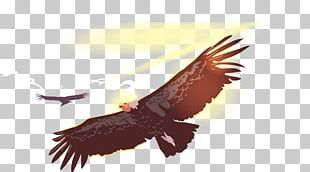 Bird Flight Owl Condor PNG