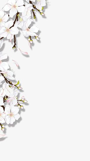 Blooming Flowers PNG