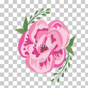Centifolia Roses Cut Flowers Garden Roses Floral Design PNG