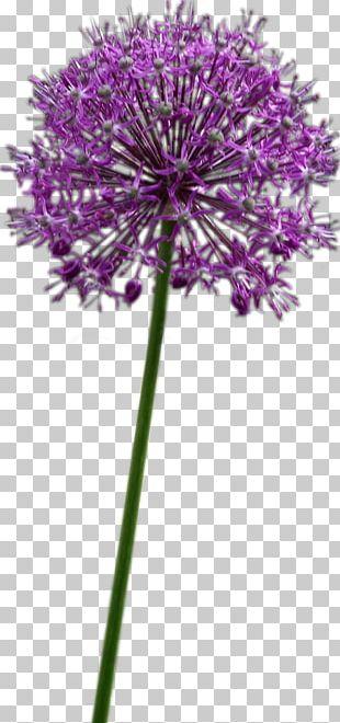 Allium Fistulosum Flower Chives Onion Allium Altissimum PNG