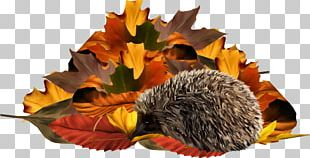 Painted Yellow Foliage Hedgehog PNG
