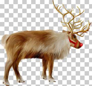 Santa Claus's Reindeer Santa Claus's Reindeer Christmas Sápmi PNG