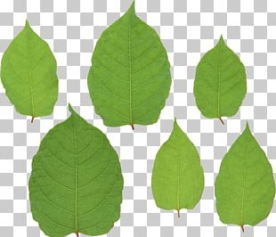 Leaf Green File Formats PNG