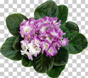 Violet Flowerpot Bud PNG