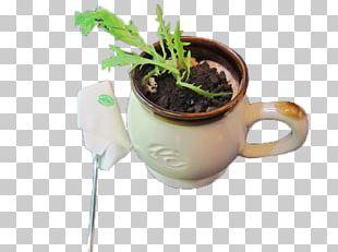 Tea Coffee Cup Milk Carbonated Water PNG