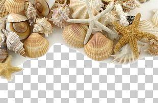 Seashell Pearl Shore Sand PNG