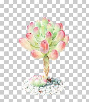 Succulent Plant Watercolor Painting Colored Pencil PNG