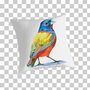 Bird Cushion Feather Pillow Beak PNG