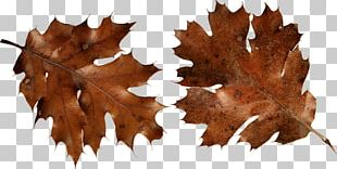 Autumn Leaf Color Brown PNG