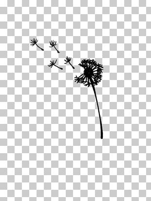 Dandelion Black And White Drawing PNG