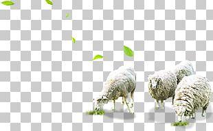 Sheep Grazing Herd PNG
