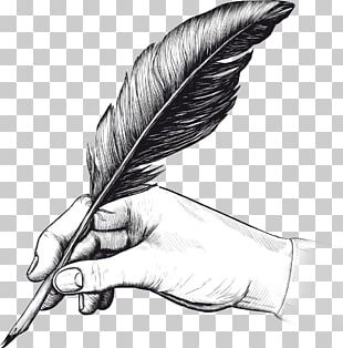 Quill Fountain Pen Drawing Writing PNG