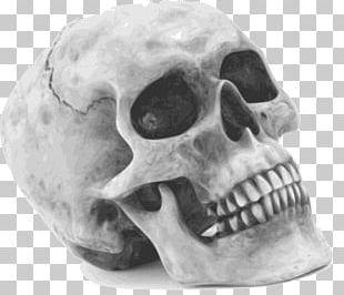 Human Skull Symbolism Human Skeleton PNG