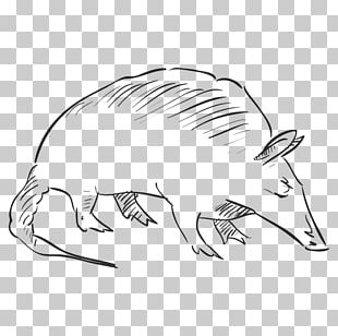Drawing Praying Hands Rat Pencil PNG