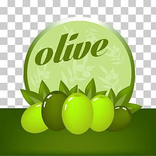 Olive Drawing Photography Illustration PNG