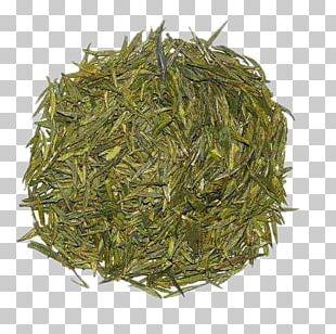 Longjing Tea Dongting Lake Junshan Yinzhen Green Tea PNG