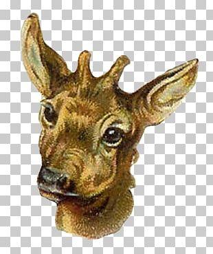 Antelope Reindeer Animal Giraffe PNG