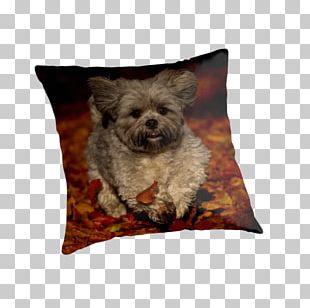 Morkie Affenpinscher Cairn Terrier Havanese Dog Border Terrier PNG