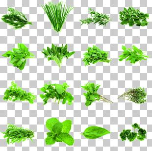 Herb Coriander Parsley Rosemary Spice PNG