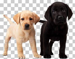 Labrador Retriever Puppy Golden Retriever Dalmatian Dog Beagle PNG