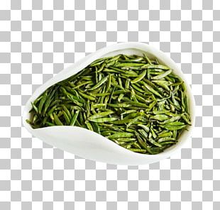 Green Tea Huangshan Maofeng Oolong Tea Leaf Grading PNG