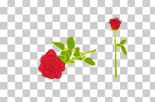 Rose Illustration PNG