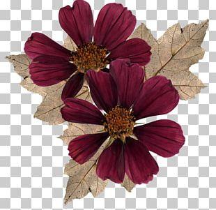 Cut Flowers Garden Cosmos Petal PNG