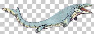 Mosasaurus Dinosaur Reptile Pteranodon Lythronax PNG