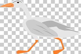 Duck Goose Water Bird Vertebrate PNG