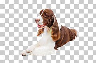 Pointer English Springer Spaniel Basenji Puppy Dobermann PNG