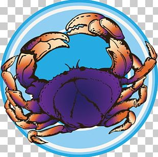 Dungeness Crab PNG