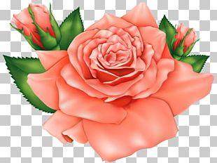 Rose Flower Pink PNG