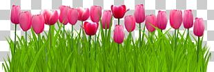 Parrot Tulips Graphics PNG