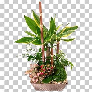 Flower Green Succulent Plant Composition Florale PNG
