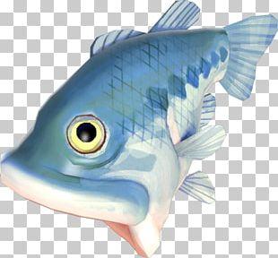 Bony Fishes Flatfish Mummy Pig Plaice PNG