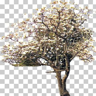 Tree Plant Computer File PNG