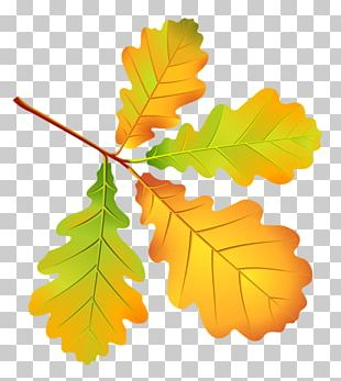 Autumn Leaves Leaf Drawing Tree PNG