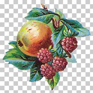 Berry Auglis Fruit Tutti Frutti PNG