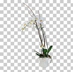 Moth Orchids Floral Design Dendrobium Flowerpot Cut Flowers PNG