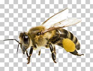 Honey Bee Bee Pollen Yellowjacket PNG