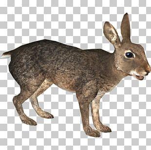 Domestic Rabbit European Rabbit European Hare Zoo Tycoon 2 PNG