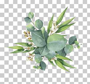 Gum Trees Euclidean Leaf Flower PNG